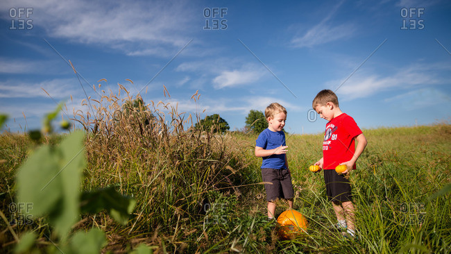 Two boys picking pumpkins of various sizes in a field