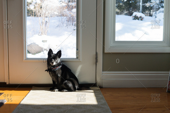 Dog waits at door of home to go outside in snow