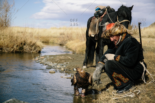 Mongolia - October 11, 2013: Mongolian hunter crouches with his golden eagle and horse at the edge of a stream