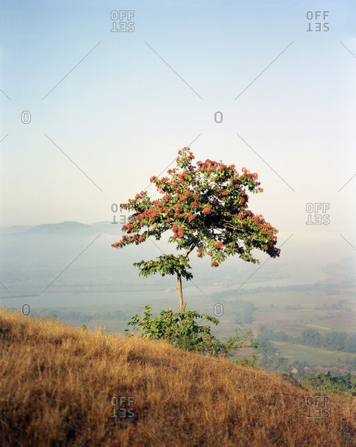 Tree with fall leaves in rural India