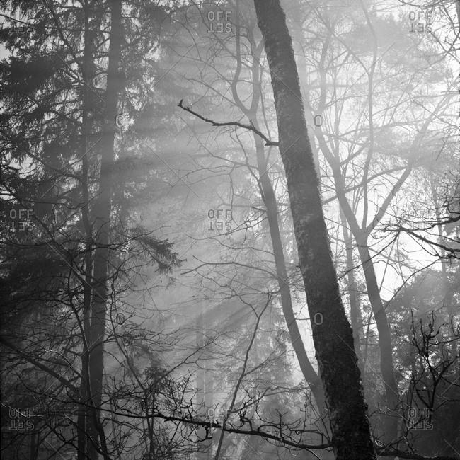 Sunlight lightning through trees