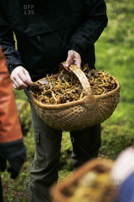 Person holding basket of mushrooms