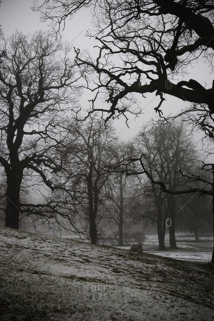 Bare trees during winter - Offset