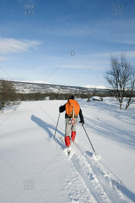 One man skiing, rear view