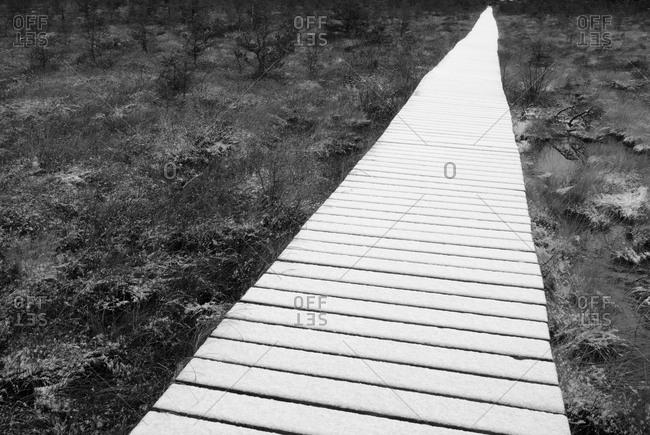 Footbridge over a swamp