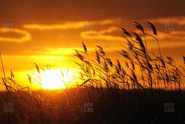 Sunset at a lake - Offset