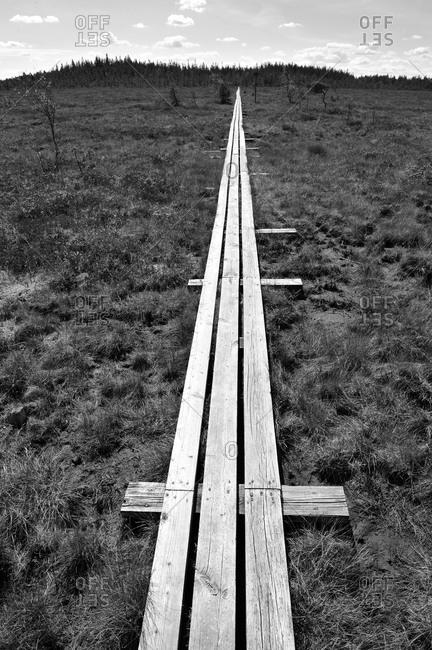 Footbridge at a swamp