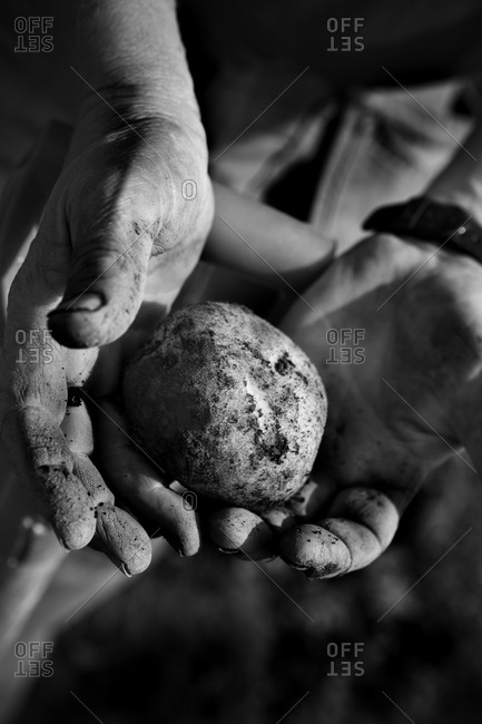 A potato in the hands of one person