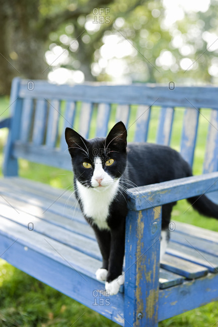 A cat on a park bench