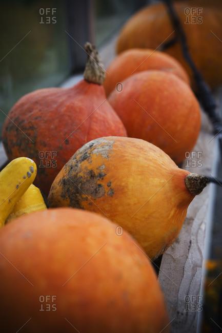 Pumpkins in a row - Offset