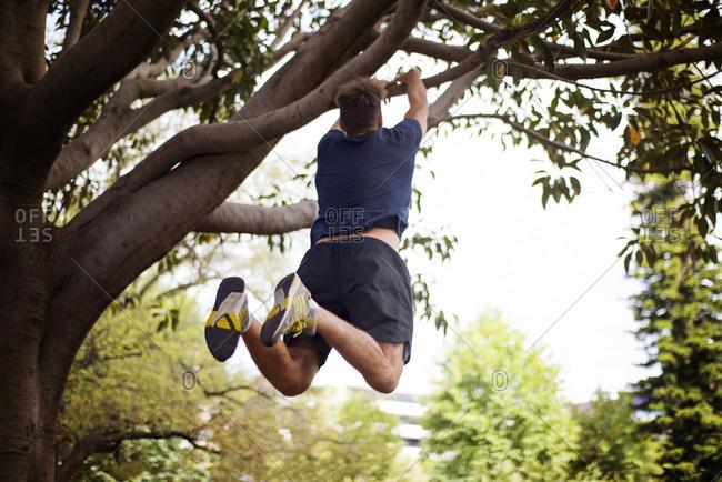 Man jumping onto tree branch