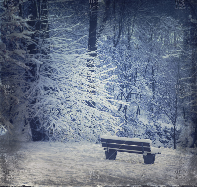 Empty bench in winter forest