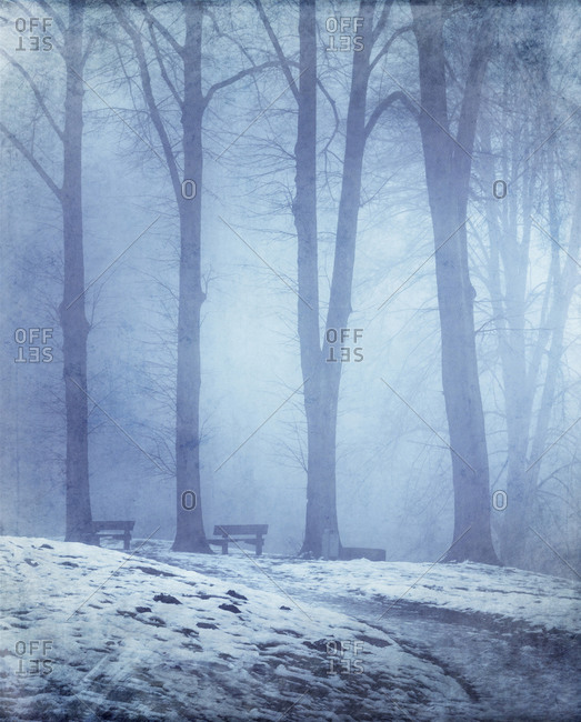 Empty winter forest - Offset Collection