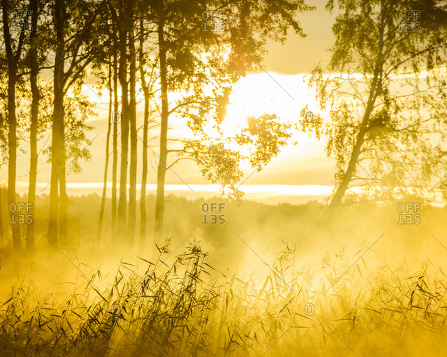 Silhouettes of grass and trees at dawn