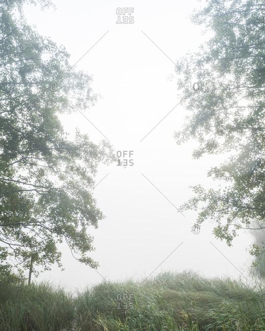 Trees against a hazy sky