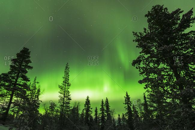 Aurora borealis above evergreen trees