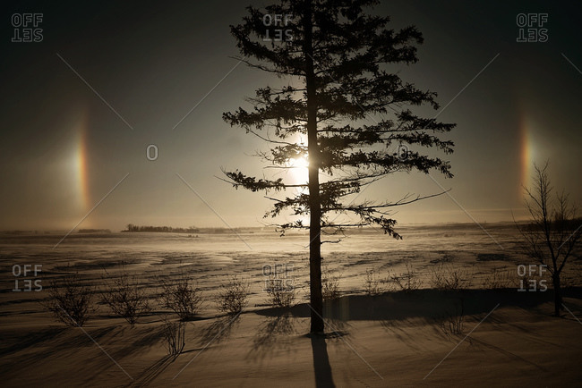 Sun dogs behind a tree in a snowy landscape