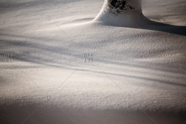 Fresh snow with shadows and tree trunk