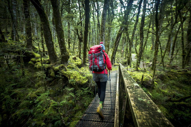 Hiker on a footbridge in a mossy green forest in New Zealand
