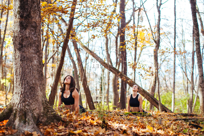 Woman in yoga positions in autumn woods