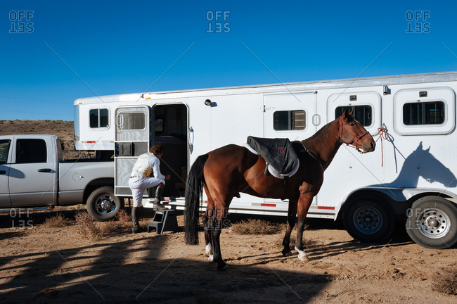 Horse tied to a trailer as rider gets ready