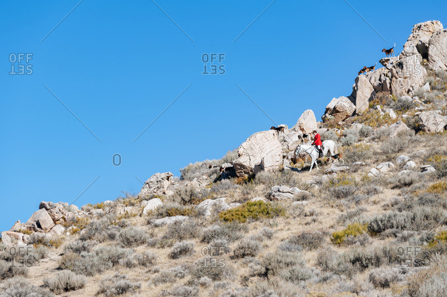 Rider on desert hill with hounds on rocks