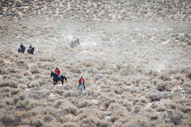 Riders on horses follow hounds in a desert fox hunt