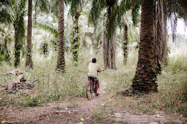 Person riding a bicycle on a dirt path beneath palm trees in the countryside of Sierra Leone