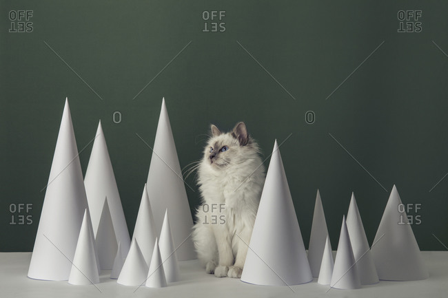 Birman cat among paper cones