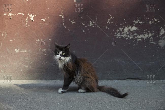 Stray cat in Latvia