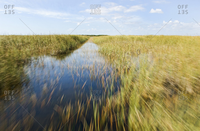 Blurred view of tall grass in remote swamp