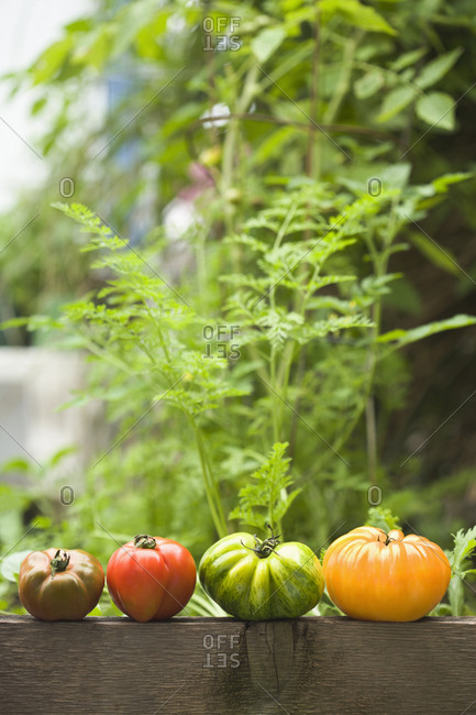 Colorful heirloom tomatoes on banister outdoors
