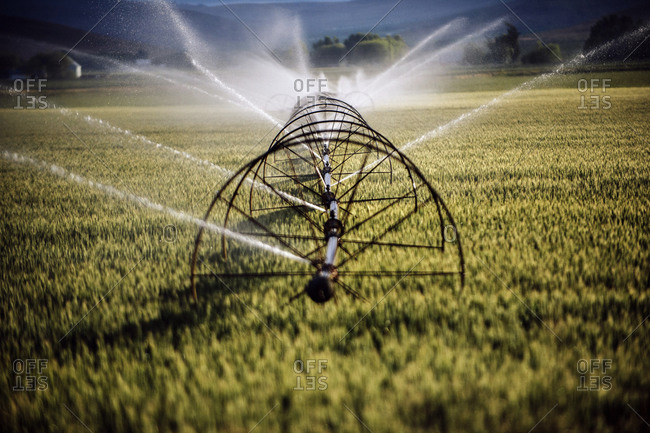 Irrigation system watering crops on farm