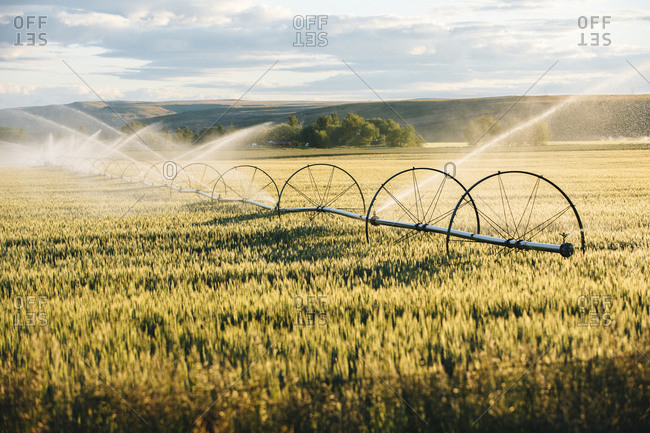 Irrigation system watering crops on field