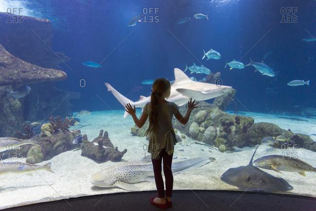 Girl admiring fish in aquarium