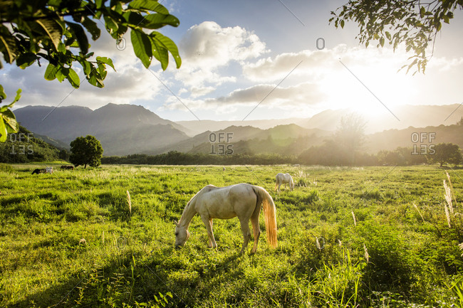 Sunbeams shining over horses grazing in rural field
