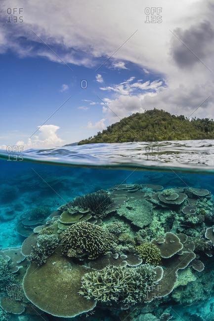 Coral reef at Pulau Setaih Island, Indonesia