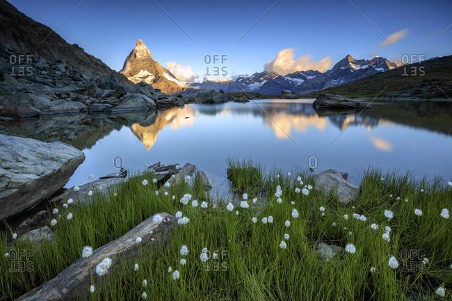 Cotton grass by Lake Stellisee, Switzerland