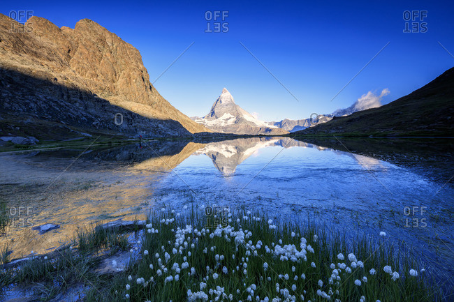 Cotton grass by lake, Switzerland