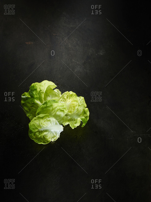 Leafy greens on a dark background