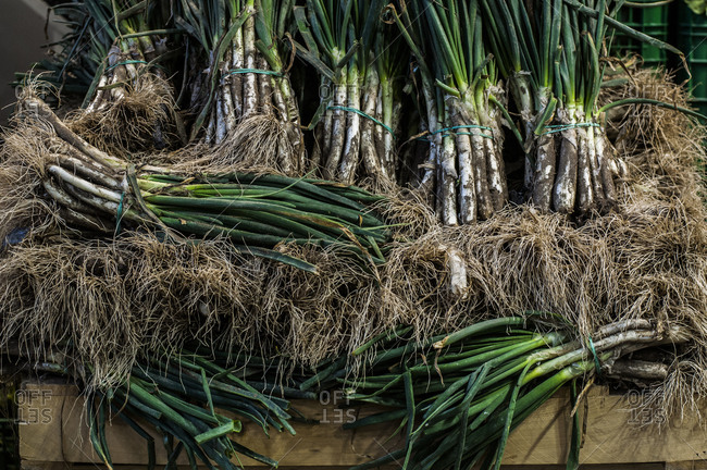 Bunches of calcot onions, a Spanish specialty, for sale at the Barcelona market
