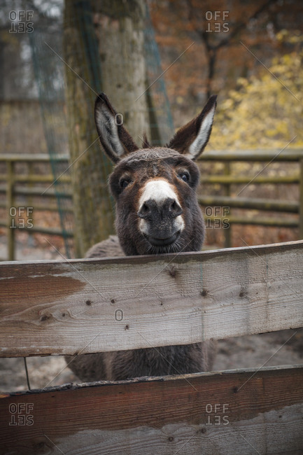 Smiling donkey at Hasenheide Park in Berlin, Germany