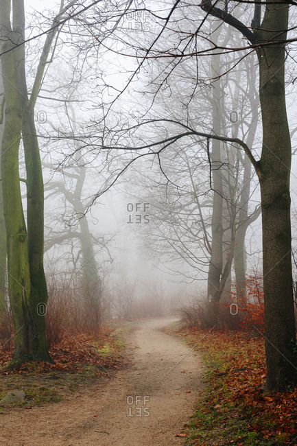 A foggy path in Sanssouci Park, Potsdam, Germany