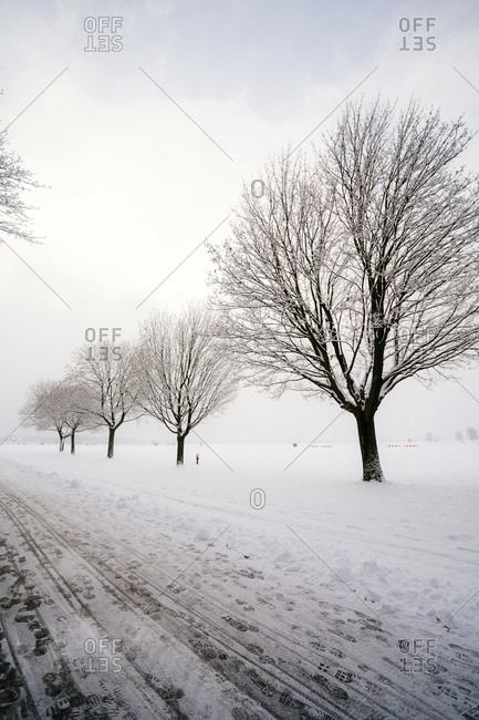 A snowy road with trees at Tempelhof Park in Berlin, Germany