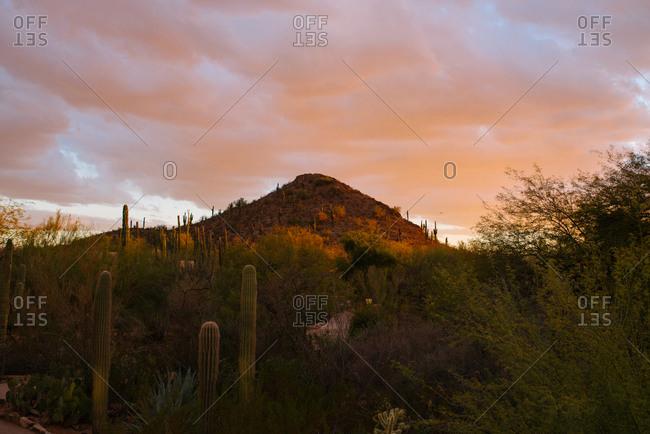 Desert plants and hill