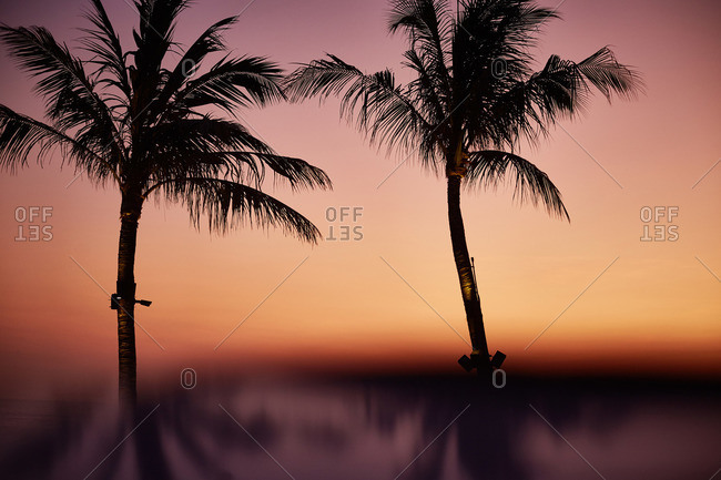 Palm trees silhouetted against a beach sunset