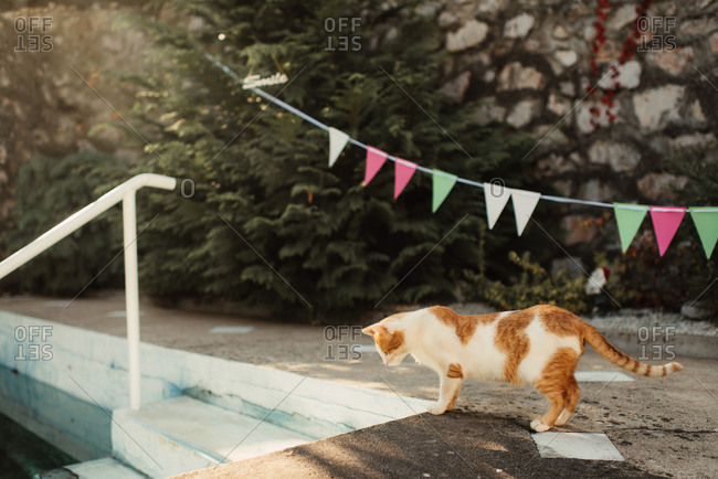 Cat looking into a murky swimming pool