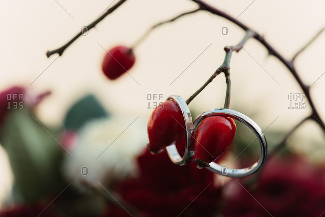 Wedding rings hanging on a branch with red berries