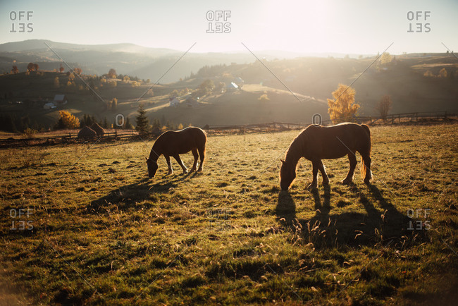 Silhouette of horses grazing in a field