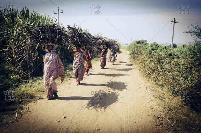 Bagalkot, Karnataka, India - November 28, 2014: Migrant sugar cane workers carrying bundles